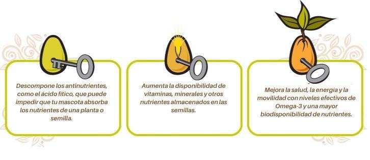 Carna4 con semillas germinadas
